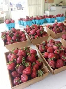 Strawberries 2014